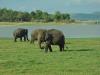 Elefanten live