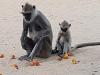 Affenfamilie zum Entertainment
