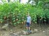 Farmer Tristan